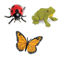 Animales e Insectos
